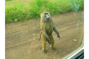Путешествие белой обезьяны ( Эфиопия ) . День одиннадцатый. Путешествие на машине времени.