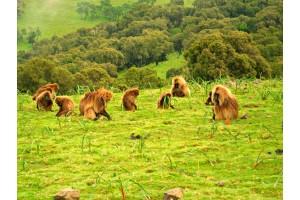 Путешествие белой обезьяны(Эфиопия).День четвертый. Симиенские горы.  Дети, птицы, обезьяны.