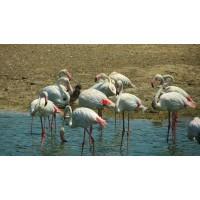 Сафари – самый большой африканский парк    на  Ближнем Востоке
