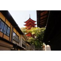 Путешествие в Японию - ветка Сакуры . Офир турс