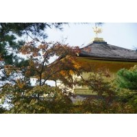 Япония в дни весеннего цветения - большое путешествие. Каспи Метрополь