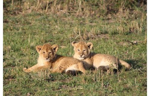 любителей животных, мечтающих увидеть их в природе , а не в зоопарке  приглашаем в приключение мы отправимся на незабываемое сафари в Кении.<p>3 789 $</p>