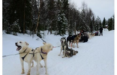 Эксклюзивное путешествие в край дикой природы и северного сияния!  Тур в Лапландию из Израиля на русском языке. <p>2 345 €</p>