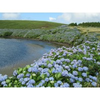 Чудеса Азорских островов. Португалия