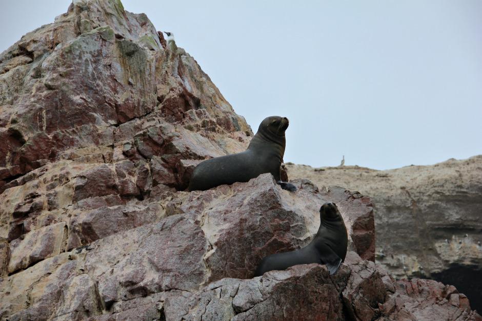 котики, пингвины, малые Галапагосы